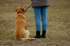 Leuke hondzitting naast zijn eigenaar, die in hond-school leren stock afbeeldingen