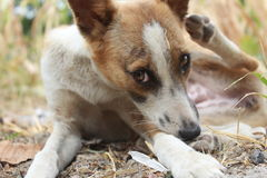 Leuke huisdierenhond Royalty-vrije Stock Foto