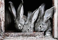 Leuke huisdierenkonijnen in een kooi Royalty-vrije Stock Afbeeldingen