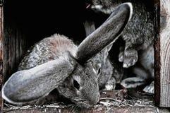 Leuke huisdierenkonijnen in een kooi Stock Foto