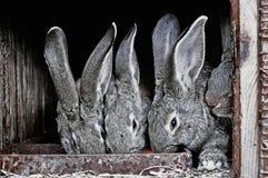 Leuke huisdierenkonijnen in een kooi Royalty-vrije Stock Fotografie