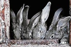 Leuke huisdierenkonijnen in een kooi Stock Afbeeldingen
