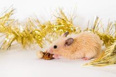Leuke jonge hamster die okkernoot eten stock foto