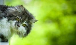 Leuke kat. Stock Fotografie