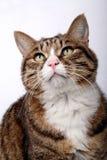 Leuke kat. Stock Foto's