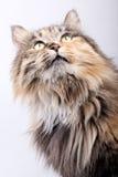Leuke kat. Stock Foto