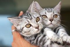 Leuke kat in de hand Royalty-vrije Stock Fotografie