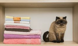 Leuke kat die dichtbij de stapel van handdoeken situeren stock foto's