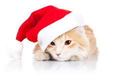 Leuke kat die een santahoed draagt Stock Afbeeldingen