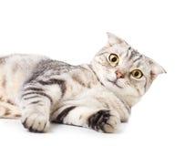 Leuke Kat die op de vloer liggen Over witte achtergrond royalty-vrije stock afbeeldingen
