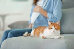 Leuke kat en vage zwangere vrouw royalty-vrije stock afbeeldingen