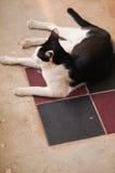 Leuke kat in het huis Royalty-vrije Stock Afbeeldingen