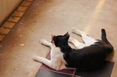 Leuke kat in het huis Royalty-vrije Stock Afbeelding