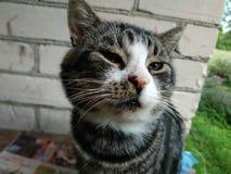 Leuke kat met groene ogen stock foto's