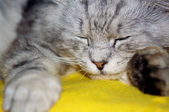 Leuke kat op gele deken Stock Foto