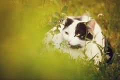 Leuke kat op het gras Stock Foto