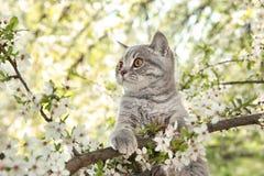 Leuke kat op tot bloei komende boom royalty-vrije stock afbeeldingen