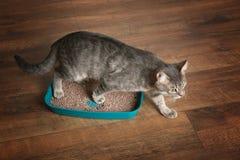 Leuke kat in plastic kattebak royalty-vrije stock foto's