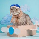 Leuke kat proef in een vliegtuig van document in een helm en glazen, grappige en grappige dieren royalty-vrije stock foto