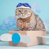 Leuke kat proef in een vliegtuig van document in een helm en glazen, grappige en grappige dieren royalty-vrije stock fotografie