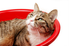 Leuke kat in rood bassin stock foto