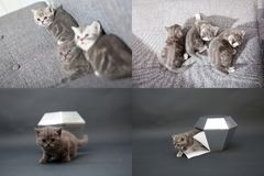 Leuke katjes die met kristal, net 2x2, voor de schermen spelen Stock Fotografie
