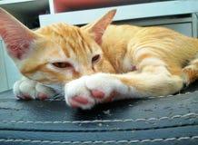 Leuke katjesachtergrond Stock Foto