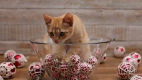 Leuke katjeszitting in glaskom met de decoratie van de Kerstmisbal stock video