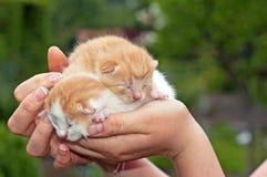 Leuke katten Stock Foto's