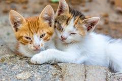 Leuke katten Stock Afbeelding