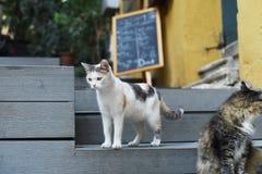 Leuke katten royalty-vrije stock afbeeldingen