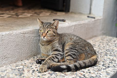 Leuke katten royalty-vrije stock fotografie