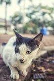 Leuke katten dichte omhooggaande foto bij de tuin Stock Afbeeldingen