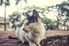 Leuke katten dichte omhooggaande foto bij de tuin Royalty-vrije Stock Fotografie