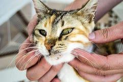 Leuke katten, mensen die en van de kat, de mooiste grote kattenogen houden kussen, stock foto