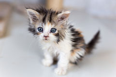 Leuke katten, mooie katten Stock Afbeelding