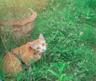 Leuke katten op geïsoleerde achtergrond Het gebruiken van behang of achtergrond Royalty-vrije Stock Foto's