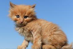Leuke kattenbaby Stock Foto