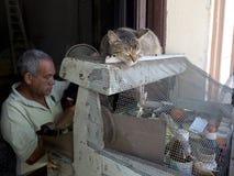 Leuke kattenslaap Stock Foto's