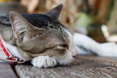 Leuke kattenslaap royalty-vrije stock foto