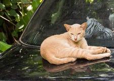 Leuke kattenslaap op een straatauto Stock Afbeelding