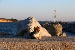 Leuke kattenzitting op de haven Rotsen en vuurtorenachtergrond royalty-vrije stock foto