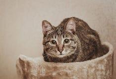 Leuke kattenzitting op de ottomane Stock Foto
