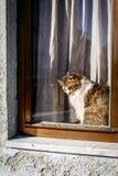 Leuke kattenzitting op venster achter het glas en buiten op het letten, openluchtmening royalty-vrije stock foto
