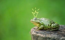 Leuke kikkerprinses of prins Pad geschilderde kroon, openlucht schieten Stock Afbeelding