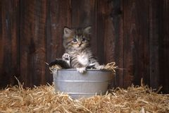 Leuke Kitten With Straw in een Schuur Royalty-vrije Stock Afbeelding