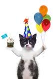 Leuke Kitten Wishing You een Gelukkige Verjaardag stock fotografie