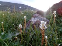 Leuke kleine bloemen op het Iovsky-plateau stock afbeelding