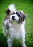 Leuke kleine hond in tuin Royalty-vrije Stock Afbeeldingen