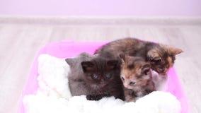 Leuke kleine katjes stock footage